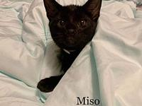 Miso's story Hi my name is Miso! I'm a super sweet,
