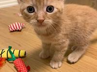 Miso's story Miso and his siblings were born on