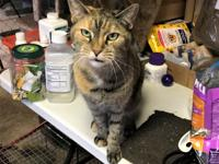 Miss Colbie is an older girl who has been with us at
