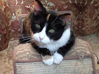 Miss Emma's story Miss Emma is a 13 year old lap cat