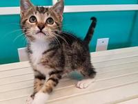 Miss Flash's story I'm a playful kitten looking for the