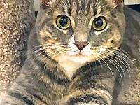 Miss Kitty's story You can fill out an adoption