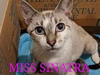 Miss Sinatra's story Miss Sinatra was abandoned