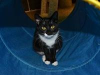 Miss Sweet Pea *Special Adoption Fee's story Ask to see