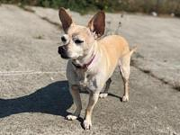 MISS DAISY's story MISS DAISY This sweet senior girl is