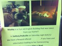 We are looking for our female English Bulldog named