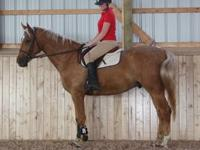 I am LOOKING for a 17 hand PALOMINO gelding. he was
