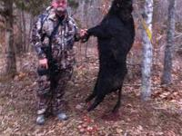 BOOKING NOW HOG HUNTS - 60 HOUR MULTI DAY HUNTS FROM