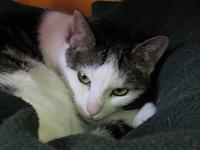 MissTree's story DOB (approximate):1/1/13 MissTree was