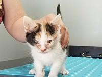 Missy $125's story Adoption fees include spay/neuter,