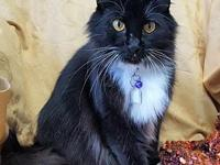 Missy 26827's story Missy is a long-haired, black and