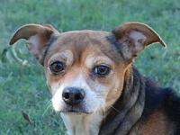 MISSY B/ LOVE BUG's story Please contact Vickie