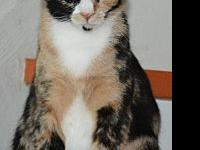 Missy's story Missy Calico DOB 5/26/2016 Are you an