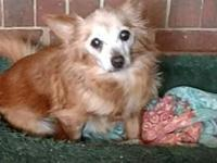Missy's story Missy is a senior dog but we are not sure