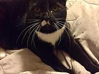 Missy's story Missy is a 5-year-old Tuxedo and waiting