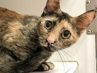 Missy's story Primary Color: Muted Tortoiseshell