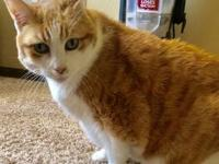 Missy's story Meet Missy! She enjoys a calm home where