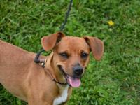 MISSY is a female Feist mix dog.  She is estimated to