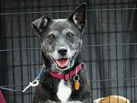 Missy's story I am Missy. I am a playful girl who loves