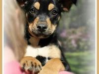 Missy is an 11 week old mixed breed adorable little