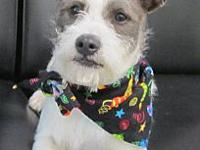 Missy's story Missy and Mister appear to be Terrier