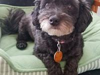 Missy's story Missy is a 3 year old maltipoo rescued