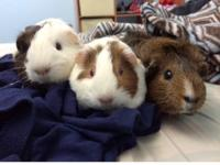 This trio needs a new home. Mister (neutered), Baby &