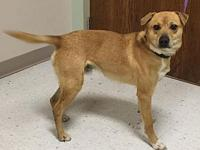 Mistletoe's story I am a 1 year old fawn male mixed