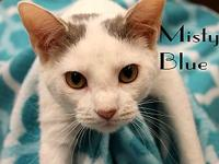Misty Blue's story The adoption fee is $85.00 with an