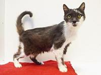 *MISTY's story Outgoing, loving, affectionate, and