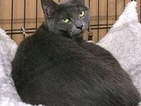 Misty's story Misty is a grey domestic shorthaired