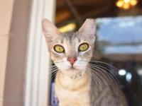 Misty's story - Misty is a lanky little lady that is