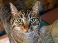 Misty's story Mista is a cute brown tabby who recently