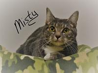 Misty's story Misty is a sweet loving fur baby looking