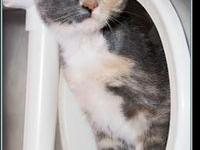 MISTY's story $97.50 FEE INCLUDES: neutering/spaying,