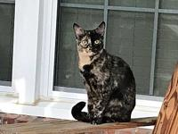 My story Misty is sweet and loves to play, enjoys her