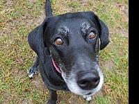 Misty's story Missty is a 12-year-old spayed female