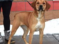 Misty's story Name: Misty Breed: Lab/ Boxer Cross Age: