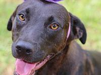 Misty's story Name: Misty Breed: Lab mix Age: 1-3 Years