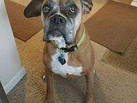 Misty Rain's story I am a 13 year old fawn female