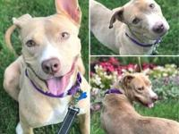 Misty's story Hi i'm Misty and am a joyful, wiggly,