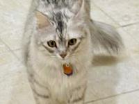 My story Misty is a sweet, loving young lady looking