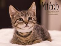 Hi, Im Mitch! I am a sweet, happy, active, playful