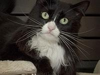 Mitchie's story Mitchie is a three year old tuxedo