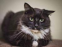 Mittens's story You can fill out an adoption