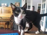 Mittens's story Mittens is a darling young female with