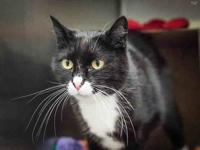 MITTENS's story Cupcake (A231634) and Mittens are