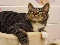MITTENS's story This animal was surrendered to the