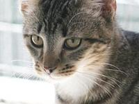 Mittens's story Mitten is a shy, gentle natured kitten
