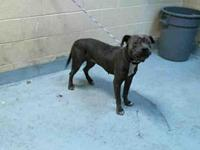 MITZI's story City of Tulsa Animal Welfare Tuesday